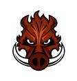 Fierce angry wild boar head vector image