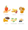 piles of different nuts peanut walnut cashew vector image