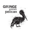 silhouette pelican in grunge design style animal vector image