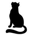Cat ap vector image