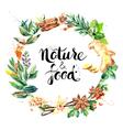 Watercolor hand drawn natural fresh herbs and vector image