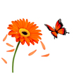 Nature summer orange flower with butterfly vector image