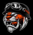 tiger with biker helmet vector image