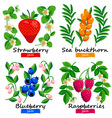 Berries and flowers set vector image