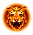 head of agressive fire tiger isolated on white vector image vector image