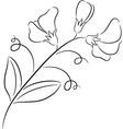 sweet pea vector image