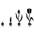 Tulips cycle vector image