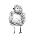 Hand-drawn pencil graphics chicken chick vector image
