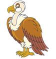 white headed vulture vector image
