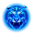 head of fire tiger in blue on white background vector image vector image