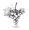 grape graphics on a white background vector image