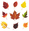 Big Set Leaves vector image vector image