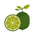 white background with one lemon fruit and lemon vector image