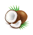 Coconut and slice isolated on white vector image