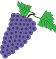 a bunch of grapes on a white background vector image