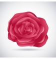 floral decoration design vector image
