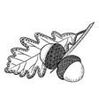 Stylized acorns and oak leaf vector image