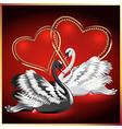 elegant swans vector image vector image