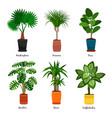 decorative indoor palm trees in pots vector image
