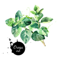 Watercolor hand drawn oregano leaves Isolated eco vector image