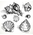 Set of sketches different shapes shell 2 Vector Image