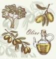 olive set hand drawn vector image