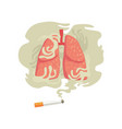 cigarette smoke and lungs bad habit dangers of vector image