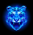 head of fire tiger in blue on black background vector image vector image