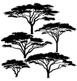 Acacia tree silhouettes vector image vector image