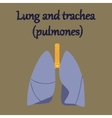 human organ icon in flat style lungs and trachea vector image