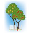 apple trees vector image