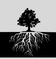 oak tree and its roots black and white vector image