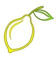 fruit lemon vector image
