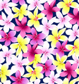 Tropical colorful frangipani plumeria flower vector image