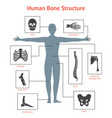 human skeleton and part set for card or poster vector image