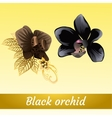Couple of beautiful exotic black Orchid vector image vector image