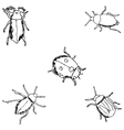Insects A sketch by hand Pencil drawing vector image