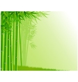 bamboo tree background vector image vector image