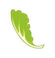 leaf of green salad vector image