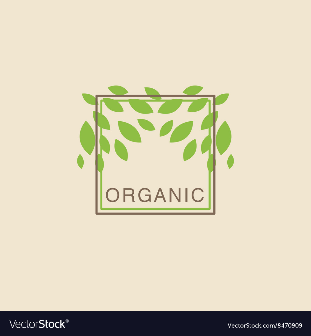 Double frame with leaves from above organic vector