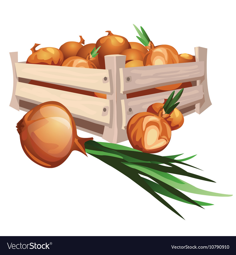 Onion harvest in wooden box vector