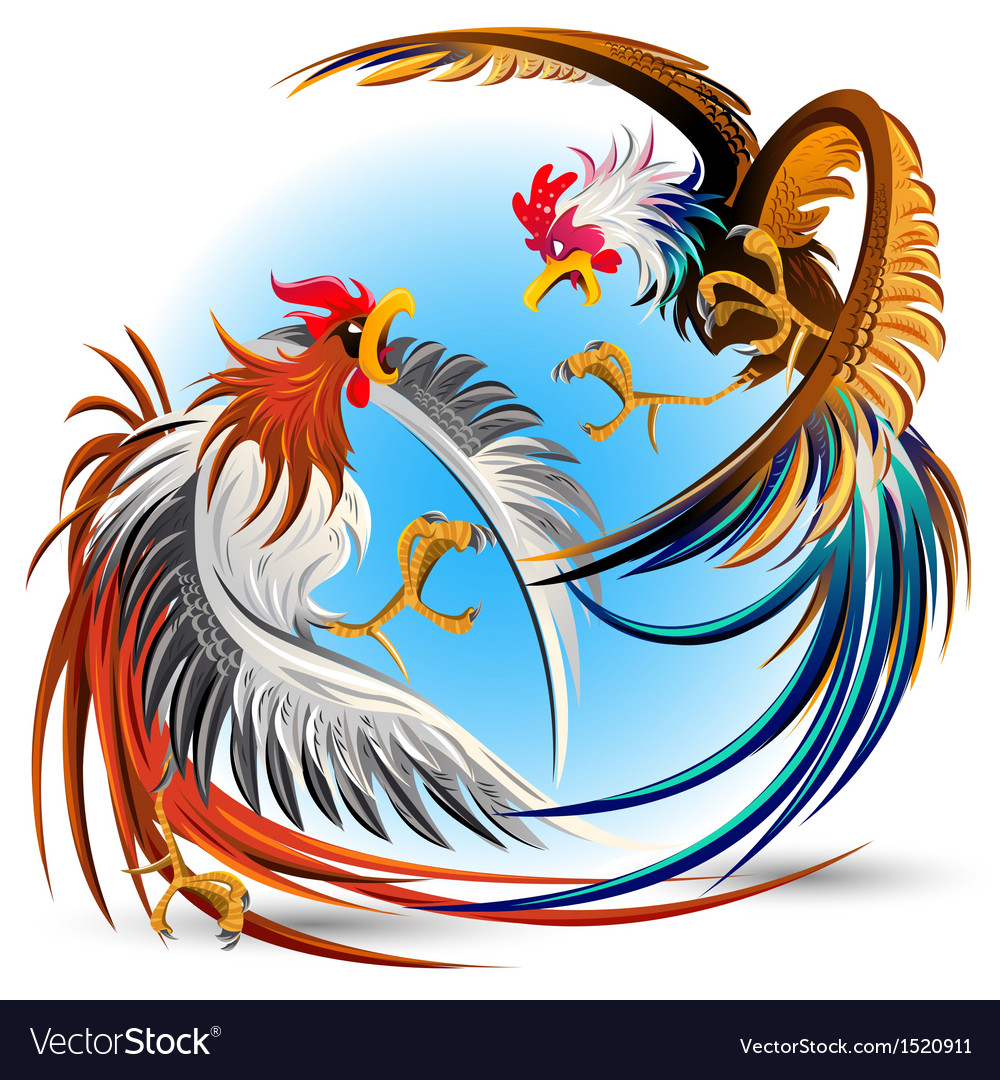 Cockfight fighting cocks vector
