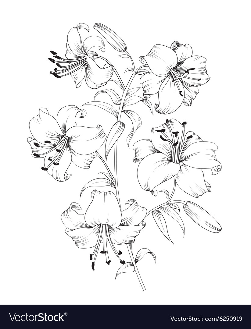 Lily flower composition vector