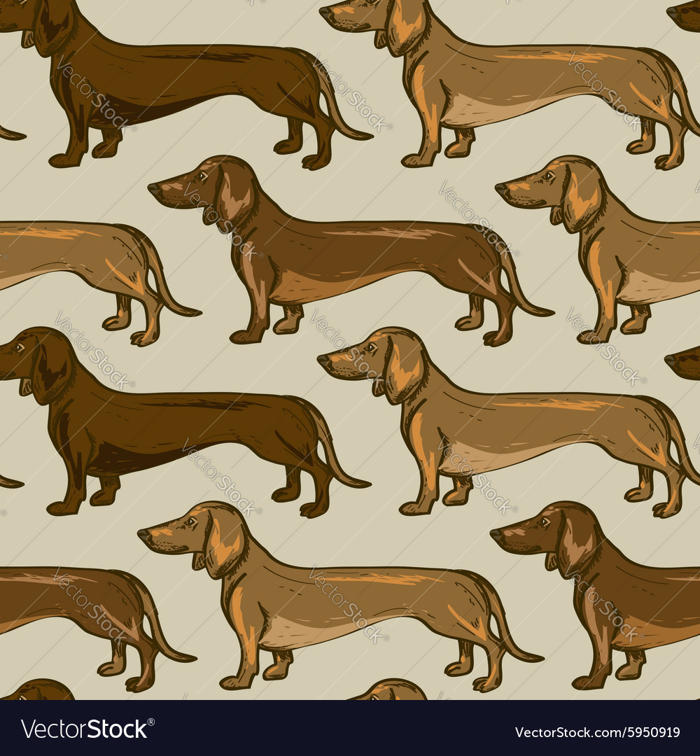 Seamless pattern of dachshund dogs vector