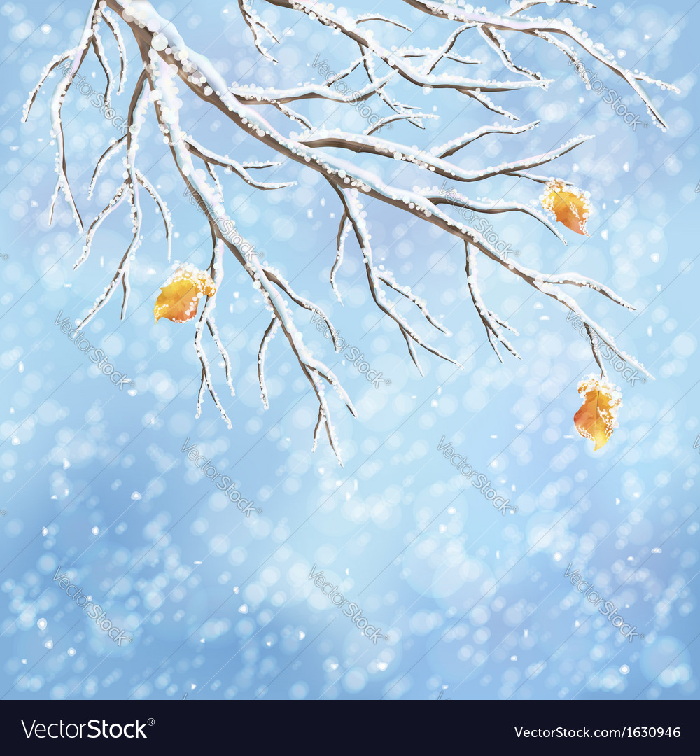 Winter snowcovered frost branch background vector