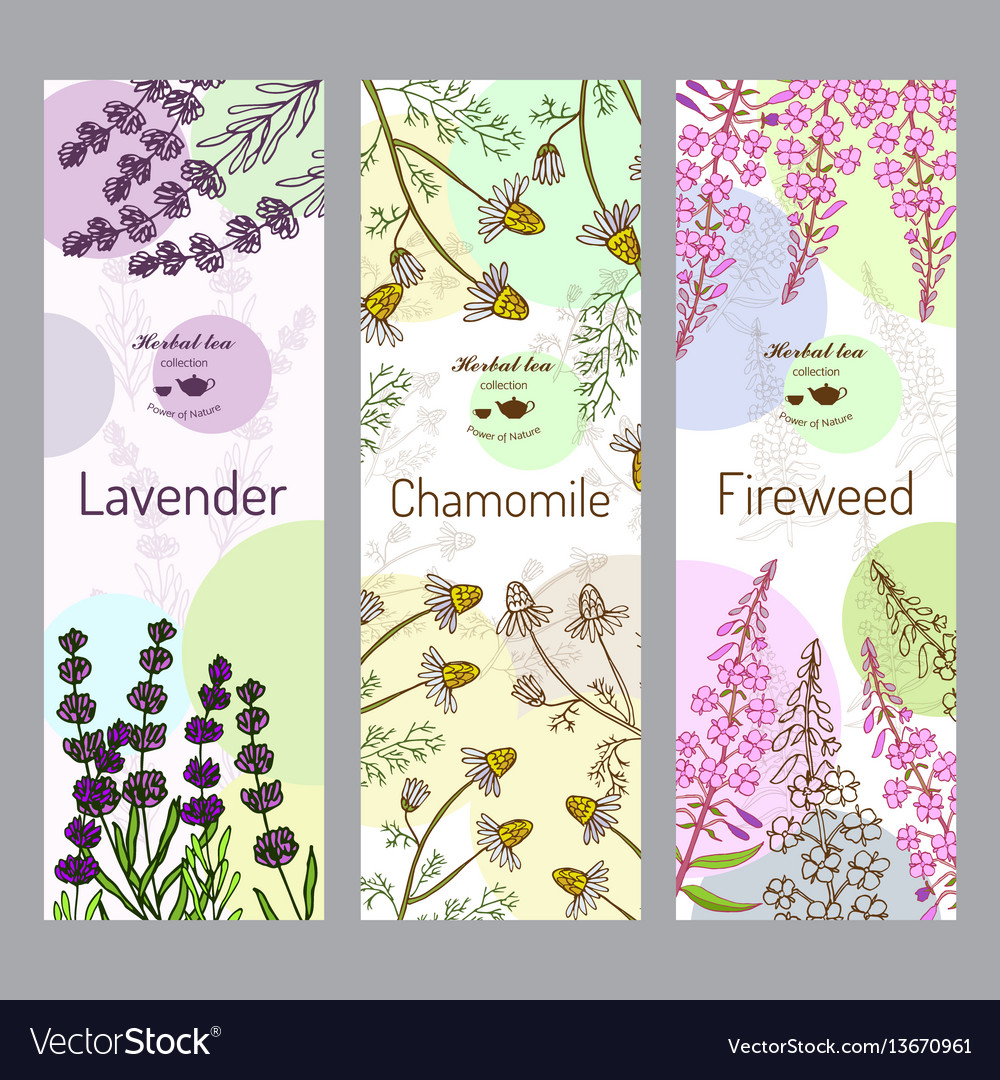 Herbal tea collection fireweed lavender vector