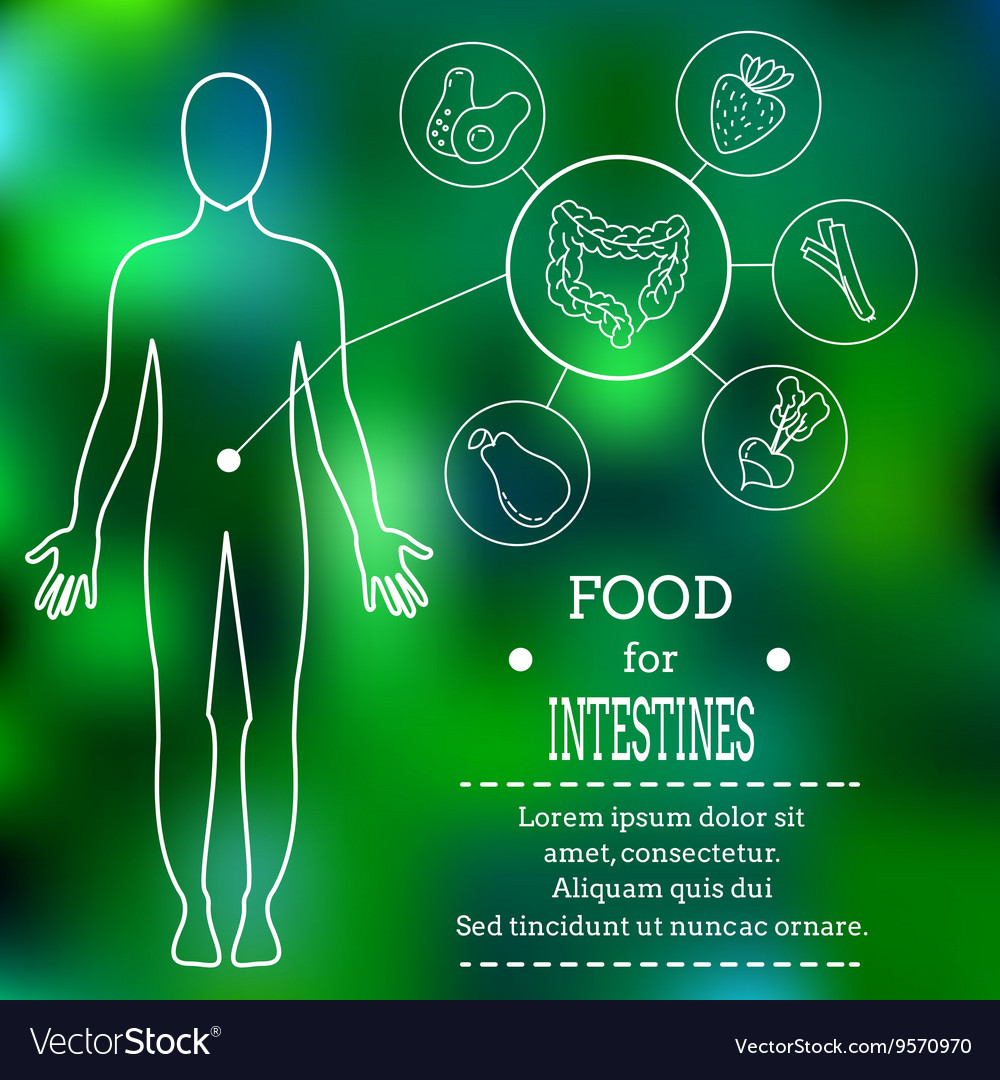 Food for intestines vector