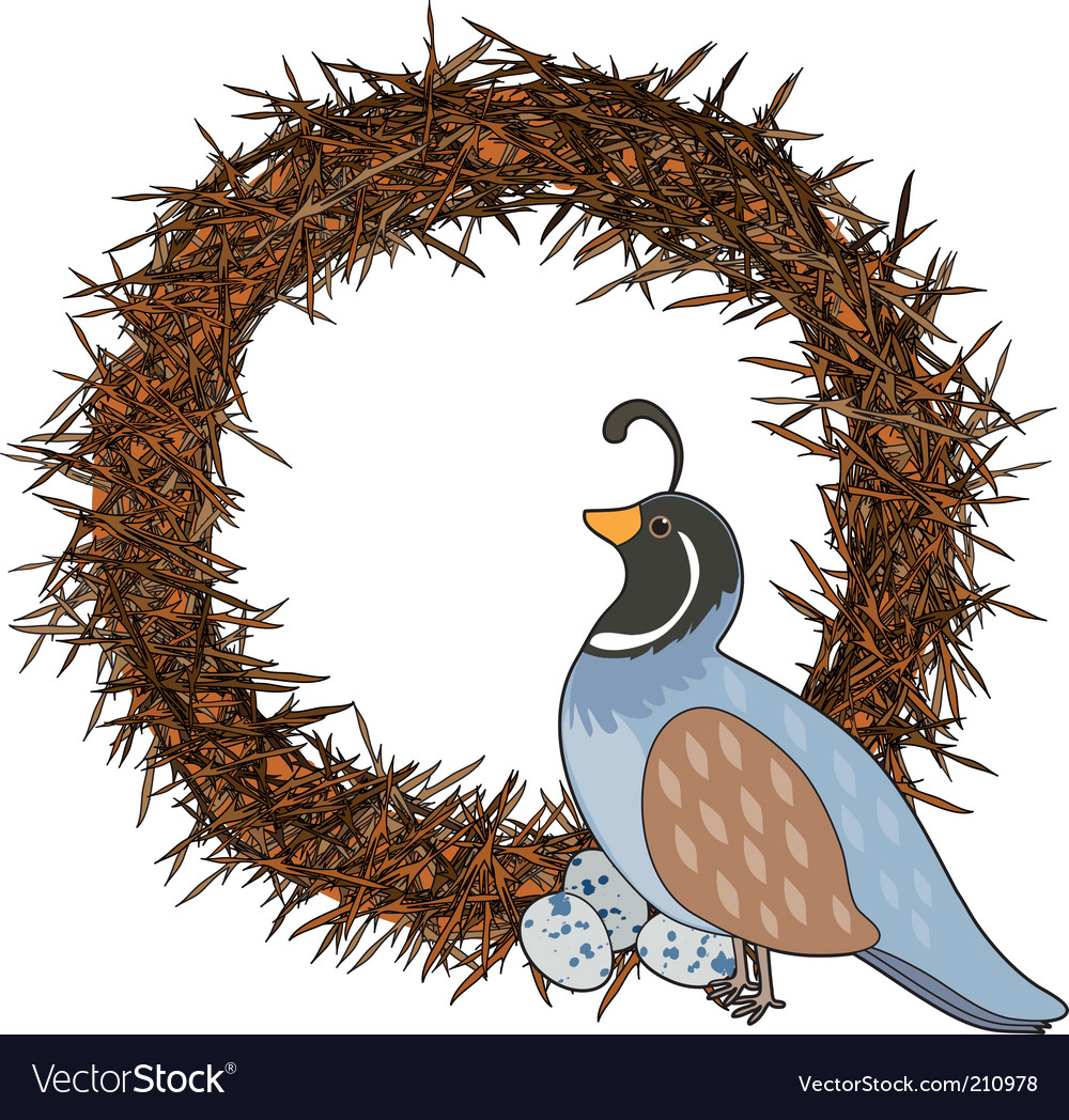 Animal alphabet quail vector