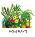 Set of indoor tree home plants in pots vector image