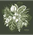 hand drawn tropical plants vector image